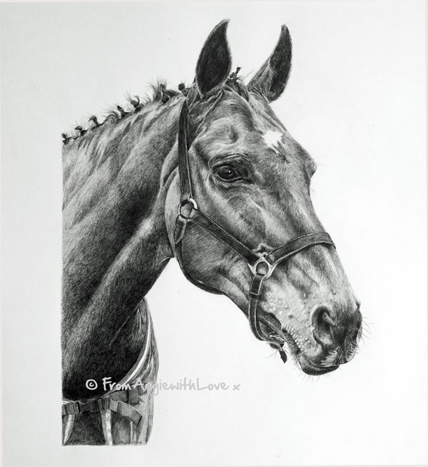 Darcy - Horse Pencil Portrait by Angie