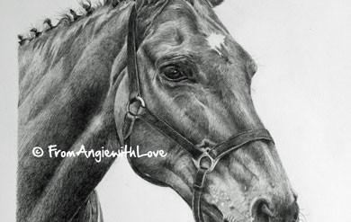 D'arcy – Hand-drawn Horse Portrait in Pencil, by Angie
