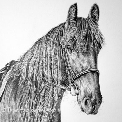 Flash - Dales Pony Pencil Portrait, drawn in pencil by Angie.