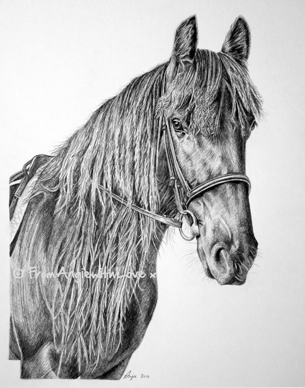 Flash - Dales Pony Pencil Portrait, drawn in pencil by Angie. Commission yours