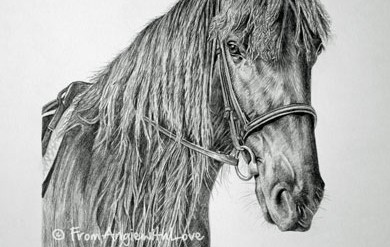 Flash – Dales Pony Pencil Portrait, by Angie x