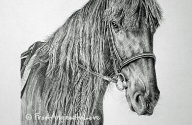 Flash – Dales Pony Pencil Portrait, by Angie x