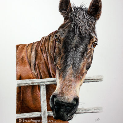 Coloured Pencil Horse Portrait of Maisy, by Angie.