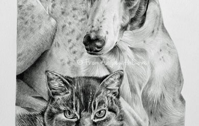 Patch & Bunny – Greyhound Pencil Portrait, by Angie x