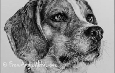 Petra - Beagle Pencil Portrait