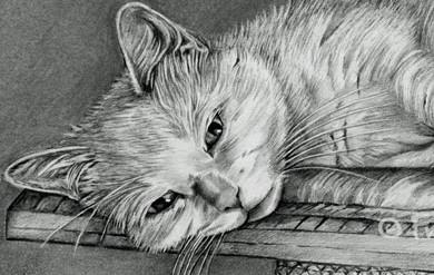 Sasha – Cat Pencil Portrait, by Angie x