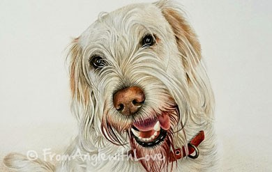 Pullo – Labradoodle coloured pencil portrait, by Angie x