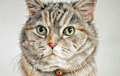 Bella – coloured pencil cat portrait., by Angie x