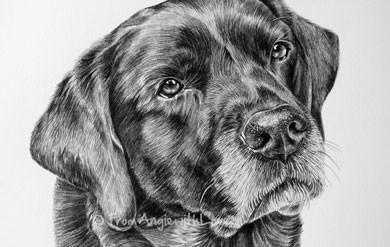 Zulu – Black Labrador Pencil Drawing Portrait, by Angie x