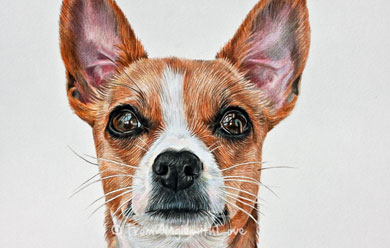 Bernadette – Chihuahua Jack Russell Cross Coloured Pencil Portrait, by Angie x