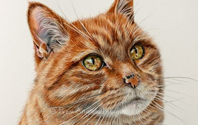 Sunny – Coloured Pencil Ginger Cat Portrait, from Angie x