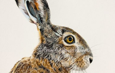Brown Hare Coloured Pencil Wildlife Art Print by Angie