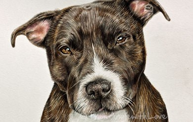 Diesel – Staffordshire Bull Terrier Coloured , by Angie x