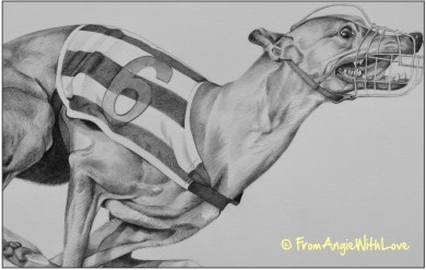 Raggie - Greyhound Pencil Portrait by Angie