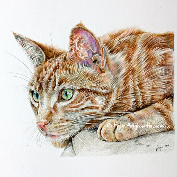 Charlie - Coloured Pencil Ginger Cat Portrait by Angie x