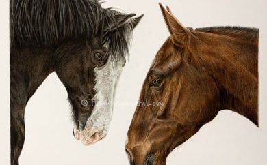 When Billy Met Lizzie – Coloured Pencil Horse Portrait, by Angie x