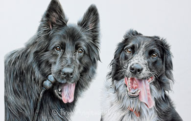 Cinder, the black German Shepherd and Sooty, a Border Collie mix. Coloured pencil dog portrait.