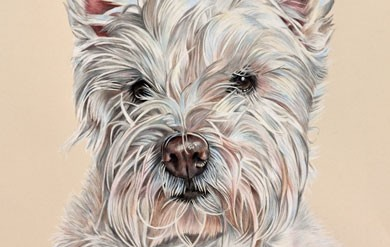 Ellie Rose – West Highland Terrier Coloured Pencil Portrait, by Angie x