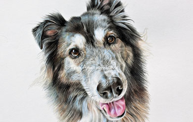 Nala - Husky/German Shepherd Cross Pencil Portrait by Angie