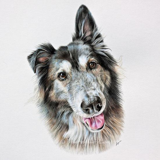 Nala - Husky/German Shepherd Cross Pencil Portrait by Angie x