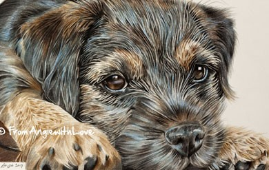 Dave - Border Terrier Coloured Pencil Portrait by Angie
