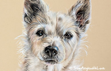 Honey - Coloured Pencil Jack Russell Portrait by Angie