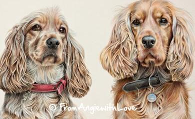 Lizzie & Harry - Cocker Spaniel Coloured Pencil Portrait by Angie
