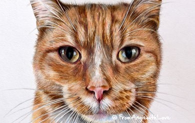 Harvey - Coloured Pencil Ginger Cat Portrait by Angie