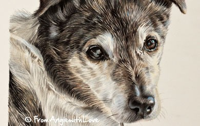 Jake - Jack Russell Coloured Pencil Portrait by Angie