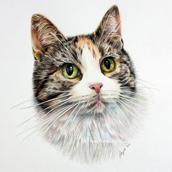 Mitzi - Coloured Pencil Cat Portrait by Angie x
