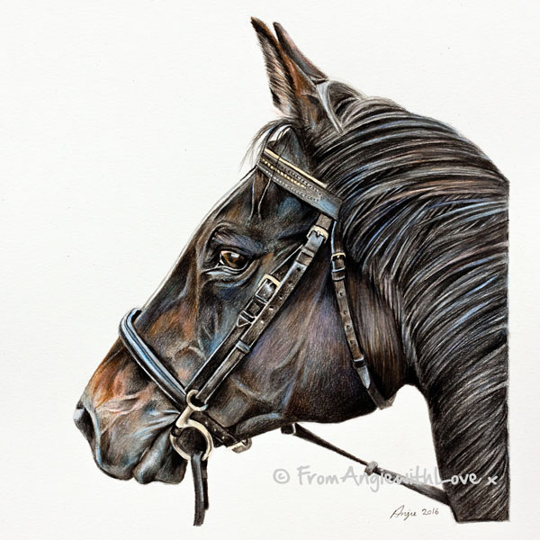 Whisper - Thoroughbred Horse Coloured Pencil Portrait by artist Angie.