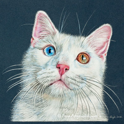 Boz - Coloured Pencil Cat Portrait by Angie