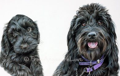 Lexi - Coloured Pencil Cockapoo Portrait by Angie. Commission your own portrait here x