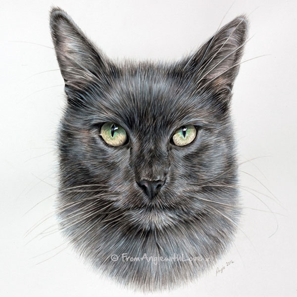 Morph - Russian Blue Cat Portrait by Pencil Artist Angie.