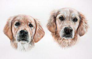 Crumble & Bella - Golden Retriever Pencil Portrait by Angie x