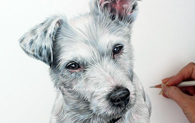 Poppy - Jack Russell Coloured Pencil Portrait by Angie x