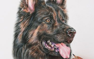 Copper – Coloured Pencil German Shepherd Portrait by Pencil Portrait Artist, From Angie with Love x