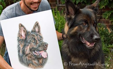 Copper - Coloured Pencil German Shepherd Portrait by Angie x