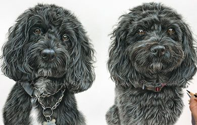 Dougie & Mille - Coloured Pencil Double Cockapoo Portrait by Angie. Commission your own pencil portrait here x