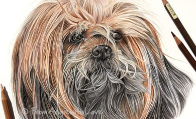 Emmy - Lhasa Apso Coloured Pencil Portrait by Angie x