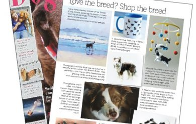 Border Collie Gypsy in Dogs Today Magazine