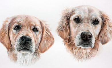 Crumble & Bella - Golden Retriever Pencil Portrait by Angie. Commission your own here x