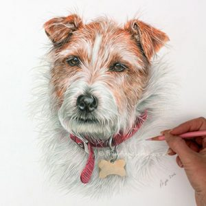 Ollie - Terrier Coloured Pencil Portrait by Angie x