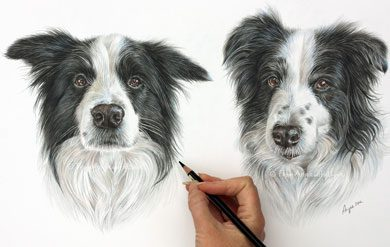 Sonny & Rosie - Border Collie Pencil Portrait by Angie