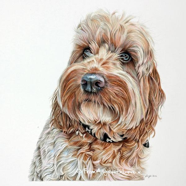 Alfie - Cockapoo Coloured Pencil Portrait by Angie.