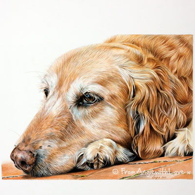 Molly - Coloured Pencil Golden Retriever Portrait by Angie