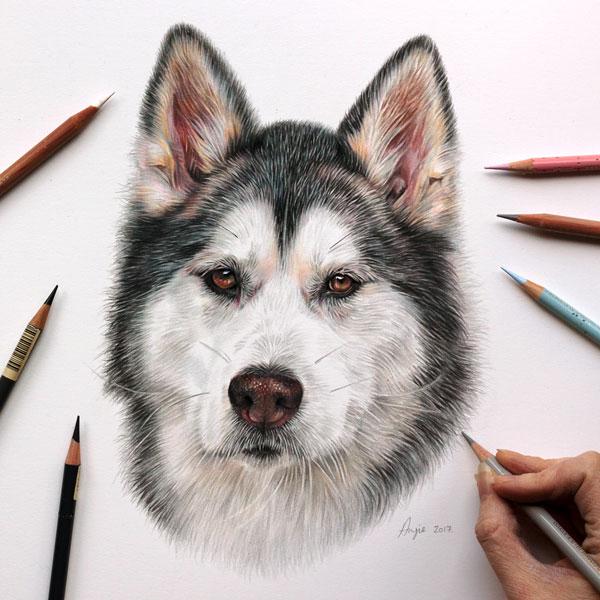 Nanuq- Malaute Husky portrait by Angie.