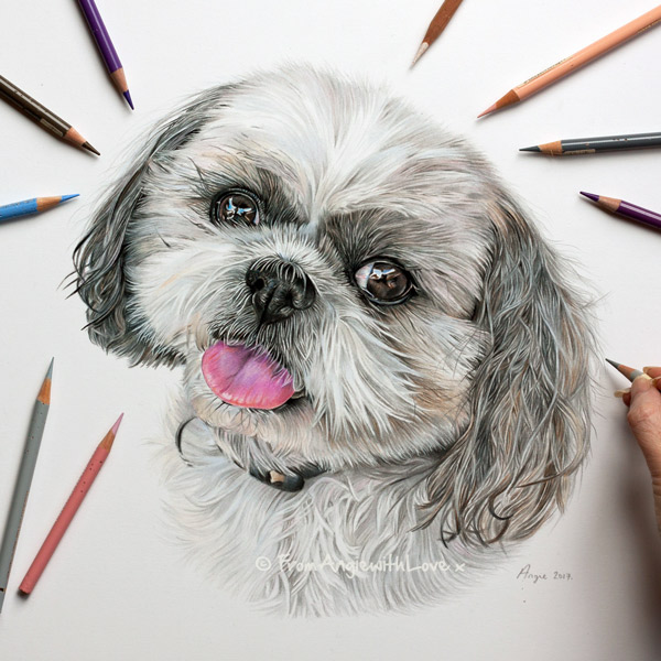 Benny - Shih Tzu Portrait by Coloured Pencil Artist Angie.
