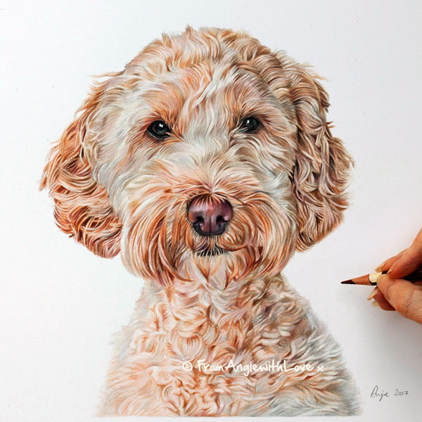 Missy - Coloured Pencil Cockapoo Portrait by Angie.