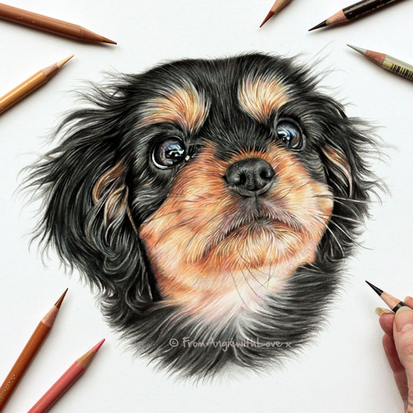 Lilly - Cavalier Puppy Coloured Pencil Portrait by Angie.
